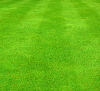 sfondo erba